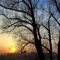 Вечер в парке :: Ирина Терентьева