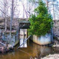 Ж/д мост в лесу Воскресенска :: Артём Тараненко