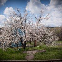 У нас во дворе. :: Сергей Касимов