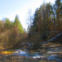 Ещё в лесу белеет снег... :: Андрей Снегерёв