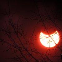 Солнечное затмение :: Станислав Берестнев