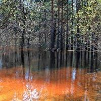 Слушает вода разрывы почек... :: Лесо-Вед (Баранов)