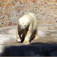 Медведь Меньшиков :: Вера