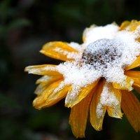 Ледяная красота :: Дмитрий Федулов