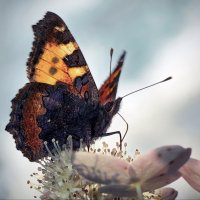 Бабочка :: GaL-Lina .