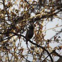 Птичка :: Aнна Зарубина