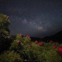 Космические цветы :: Роман Любимский