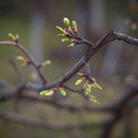 Весна :: Dasha Darsi