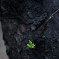 Частичка весны :: Анастасия Шумихина