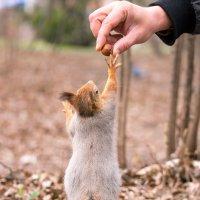 Потягушки за орехом! :: Alex Bush