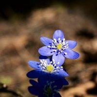 OOOO весна :: Valdis Veinbergs