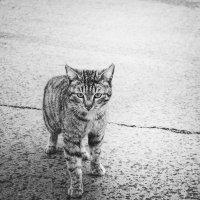 cat :: Вероника
