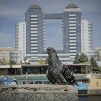 Новая голубятня :: Petro Rebro