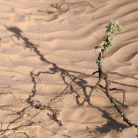 Весна в пустыне :: Григорий Карамянц