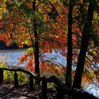 Осень в центральном парке :: Maxim Unarov