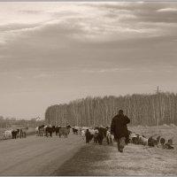 Пастух! :: Сергей Афонякин