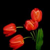 Время тюльпанов :: Наталья (D.Nat@lia)