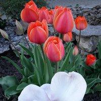 Цветы весны :: svetlanavoskresenskaia