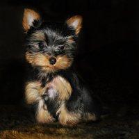 Мой ласковый и нежный зверь :: Oleg Akulinushkin