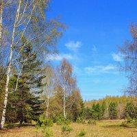 В прозрачности апрельской тишины... :: Лесо-Вед (Баранов)