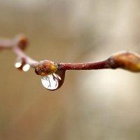 Весенний дождик :: Елена Перевозникова