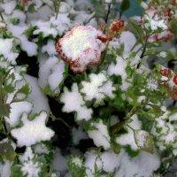 Первый снег,  неожиданно! :: Галина Карименко
