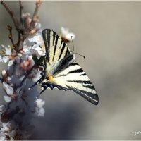 spring11 :: yameug _