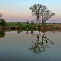 Тихий апрельский вечер над старым прудом... :: евгения
