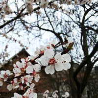 Довго очікувана весна :: Сергей Философ