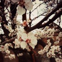 Весна 2 :: Сергей Философ
