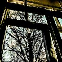 Старая берёза под моим окном... :: Михаил