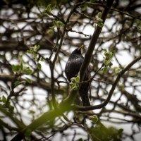 Птица :: Юлия Синицына