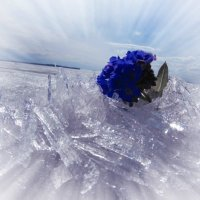 Мечта :: Анна Гурина