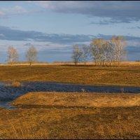 весенние разливы... :: Наталья Маркова