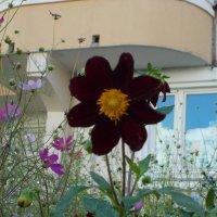 Цветок под балконом :: Валерий