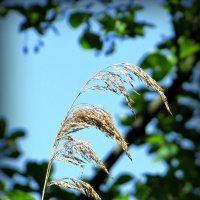 Лето... :: Natalisa Sokolets