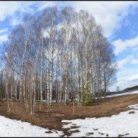 Из серии Весна :: Борис Гуревич