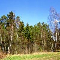 Тёплый весенний день :: Андрей Снегерёв
