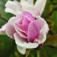 цветы :: Клаудия Мойш