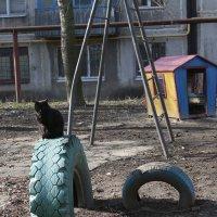Чёрный кот :: Сергей Касимов