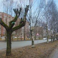 В городе весна :: Борис Гуревич