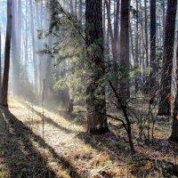 Уже не гостем солнышко в лесу... :: Лесо-Вед (Баранов)