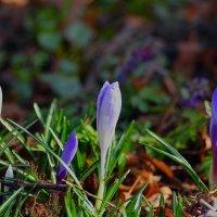 Доброе утро, весна! :: ID@ Cyber.net
