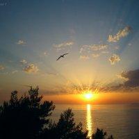 Небес прекрасное видение :: Николай Ярёменко