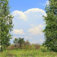 Летний пейзаж. :: оля san-alondra