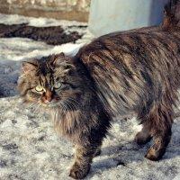 кошка :: Елена Ганичева