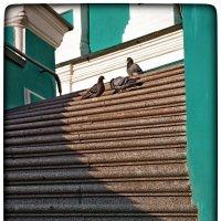 лестница к любви и голубям :: Natalia Mihailova