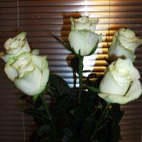 Розы :: Елена Шидловская