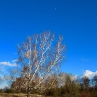 Весенний, лунный день :: Maxim Agafonoff