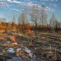 Апрель в лесу...Возле деревни Окуловская. 29.04.2015. :: Федор Кованский